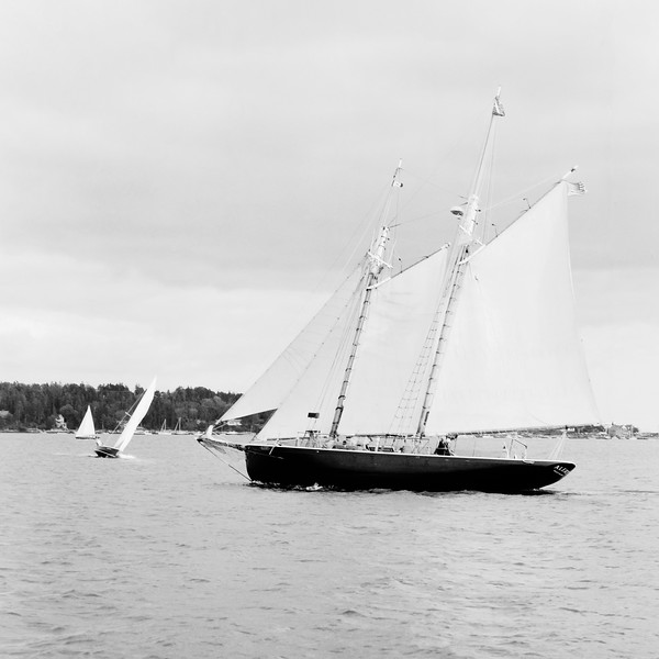 The Schooner 'Alert' Sails through Regatta