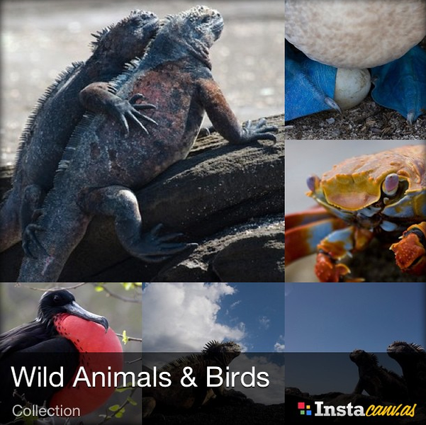 """Animals! New Instacanvas collection. Prints starting at $9.00 <a href=""""http://instacanv.as/leightonoc/collections"""">http://instacanv.as/leightonoc/collections</a>"""