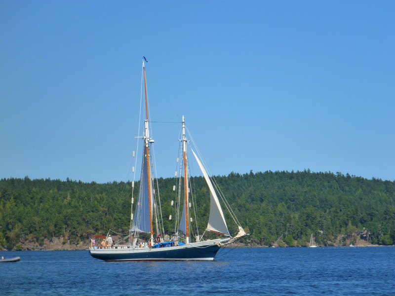 We saw these schooners between Shaw and San Juan Island