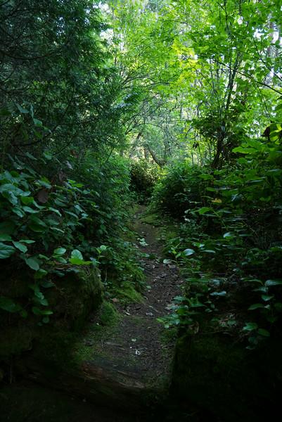 Patos trails