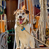 Buddy - Crew on  Schooner Tyrone