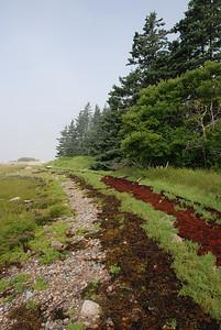 lines of seaweed