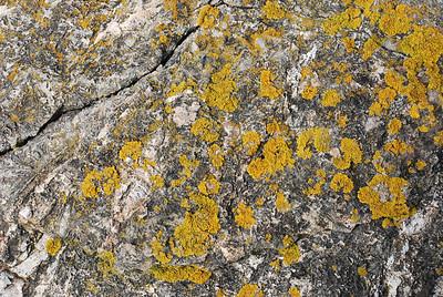 lichen and rock