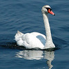This swan hung out right near the boat, guess he was looking for a free meal.