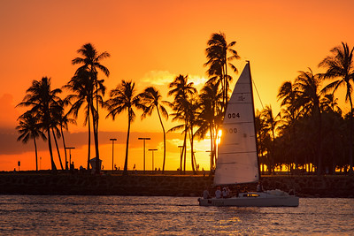 Palm Trees and Sailboats