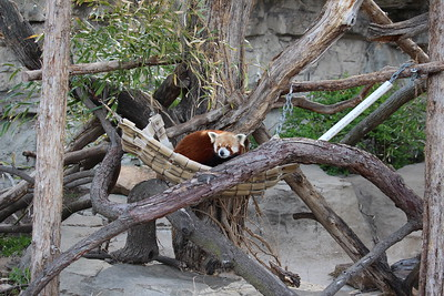 2018-04-21:  St. Louis Zoo
