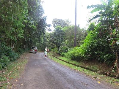 St Lucia (birding road)