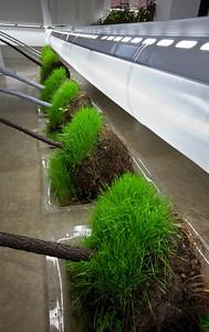 Cultiver son jardin_Exposition_CENTRE DE DESIGN DE L'UQAM_2010-2011_© Michel Brunelle