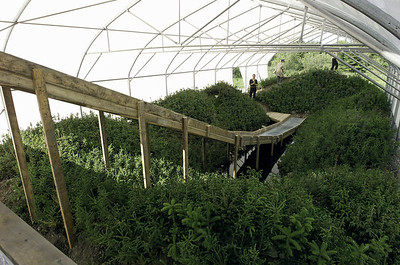 BGL_03_La source_BGL_©Michel Lavandière Jardins de Métis Reford Gardens