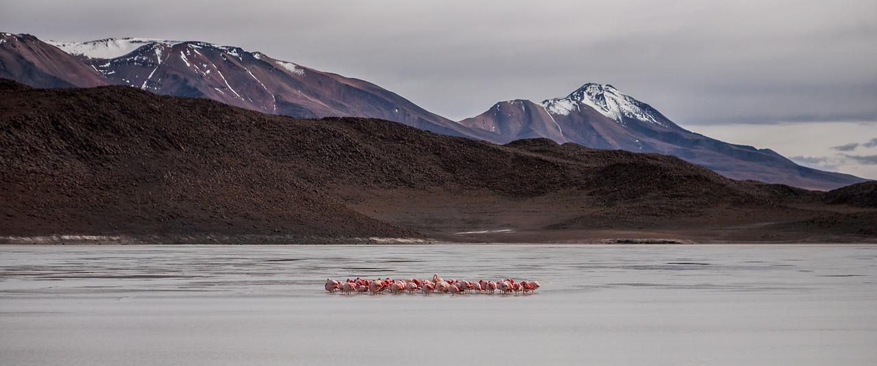 Flamingoes and lagunas, Salar de Uyuni tour