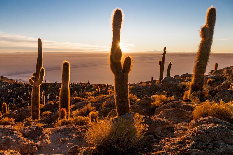 Giant cacti on Incahuasi island, Salar de Uyuni, Bolivia