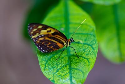 Cockrell Butterfly Center photos