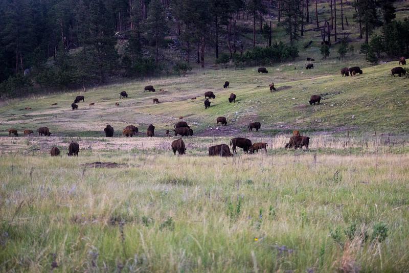 The Herd is Far Away Now