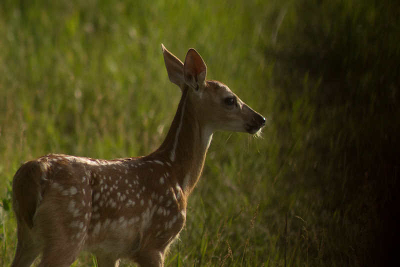 The Darkness Encroaches onto Bambi