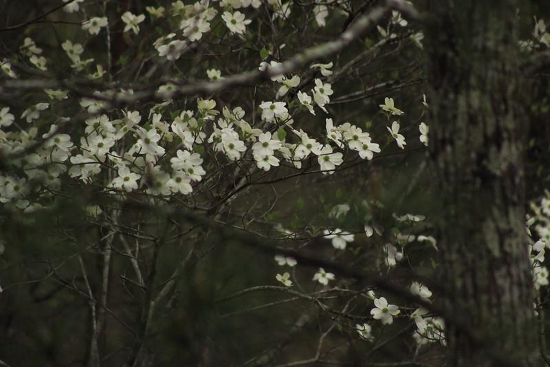 Bloom-Rise