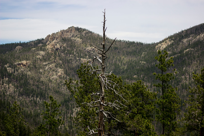 Pointed Dead Woods