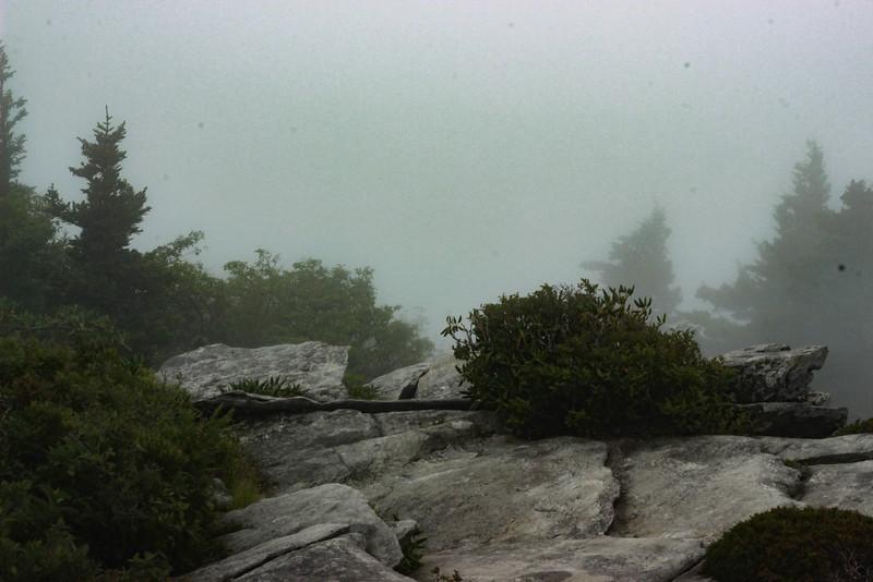 Foggy day at Rough Ridge