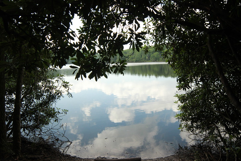 Reflections through the Mangrove