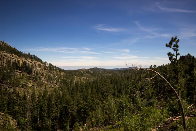 Bent Pines