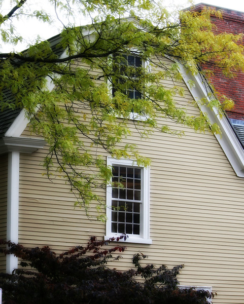 Architecture with Tree in Salem