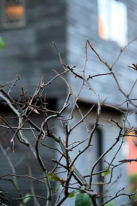 Thorns at the Witch House