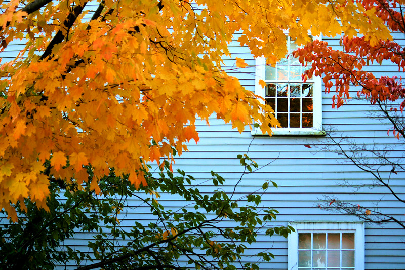 Autumn Leaves in Salem