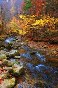 Fall Flowing In