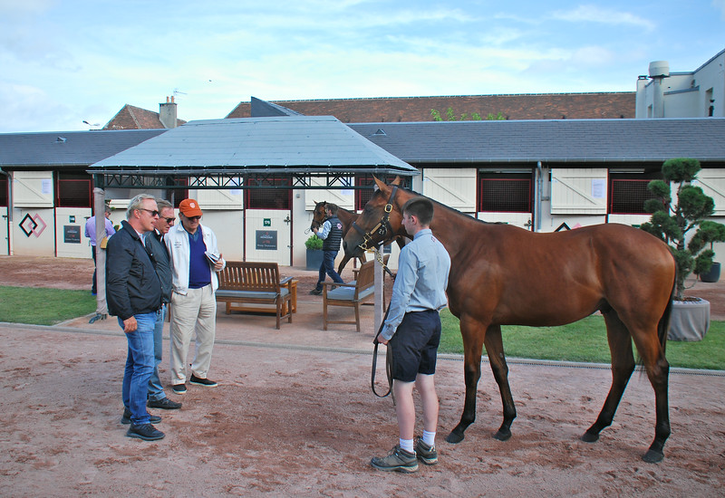 Lot 21, by Fastnet Rock out of Starlet's Sister, is inspected by Peter Brant (orange cap) of White Birch Farm and his team ahead of the Arqana August Yearling Sale<br /> John Gilmore Photo