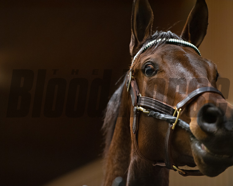 Close up during auction at Keeneland<br /> Keeneland January Horses of all ages sales on<br /> Jan. 15, 2020 Keeneland in Lexington, KY. Photo: Anne M. Eberhardt
