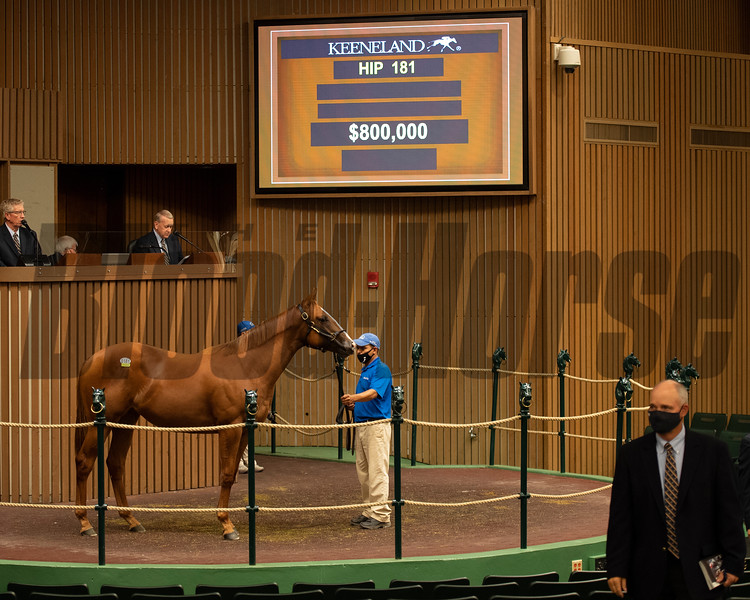 Hip 181 at the Keeneland September Yearling Sale on September 13, 2020. Photo: Anne M. Eberhardt