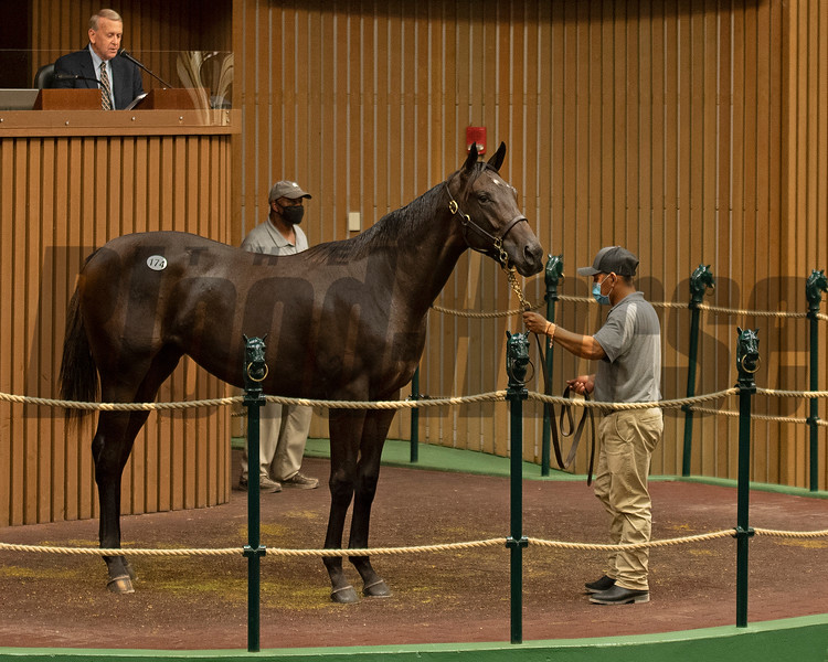 Hip 174 at the Keeneland September Yearling Sale on September 13, 2020. Photo: Anne M. Eberhardt