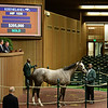 HIP 1535 Buy Sell Hold. from Hill n Dale, Keeneland November sales