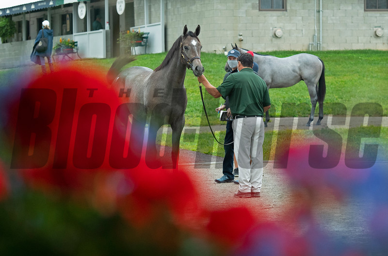 Hip 425 at the Keeneland September Yearling Sale on September 13, 2020. Photo: Anne M. Eberhardt