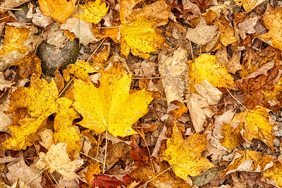 Autumn Carpet #1