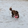 Havin' a Ball! -- 01/21/18
