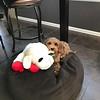 My Lambchop -- 07/26/17