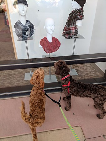 What do you think sister, the plaid with red for me, the other plaid for you and red for mommy? -- 11/16/17