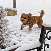 SNOW!!!!!!!! -- 11/08/17