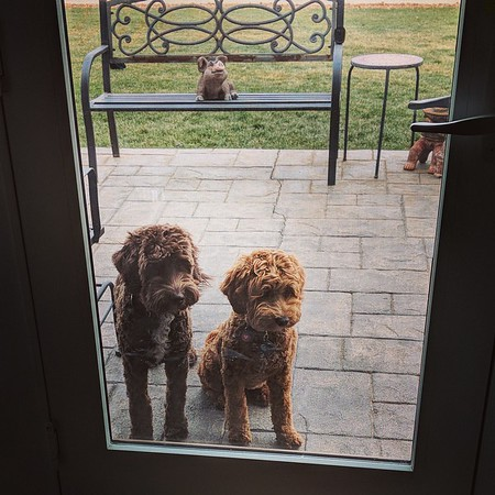 Can We Come In? -- 11/20/17