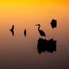 Heron Silhouette 2