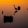 Heron Silhouette 1