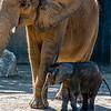 Fitz, the baby elephant