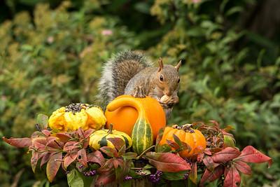 Thankful Squirrel
