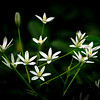 Star of Bethlehem 2
