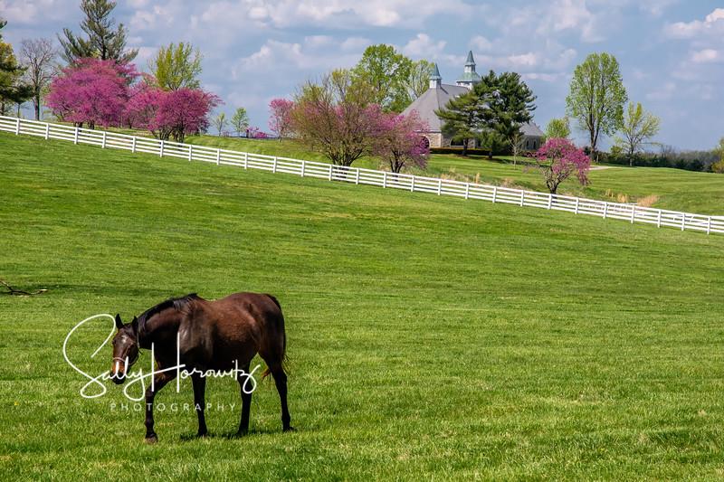Donamire Spring 2