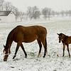 Calumet Winter 1