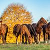 Autumn Gathering