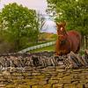 Shaker Horse 1