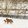 Kentucky Winter 1