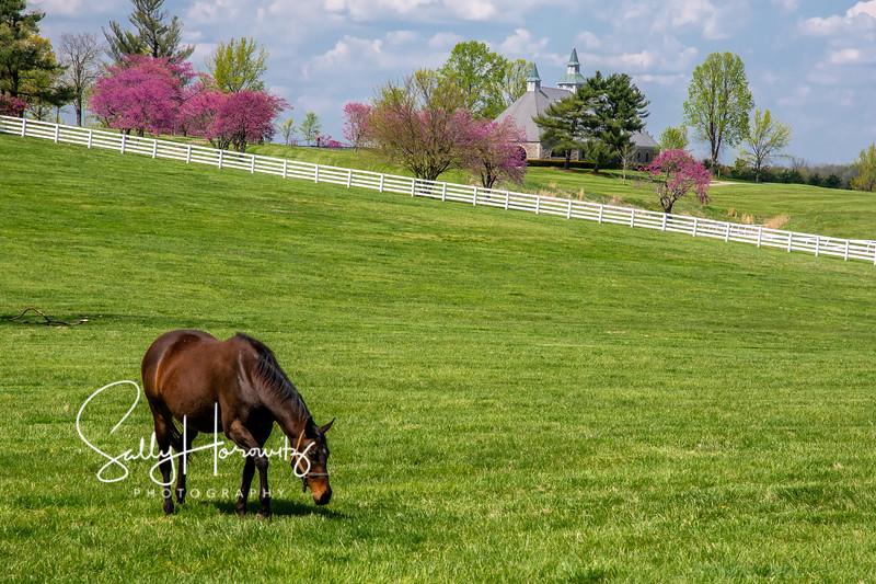 Donamire Spring 3